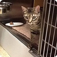 Adopt A Pet :: Avery - Colmar, PA