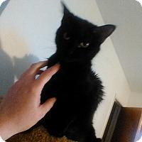 Adopt A Pet :: BB - Fairborn, OH