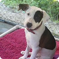 Adopt A Pet :: Betsy - Edisto Island, SC