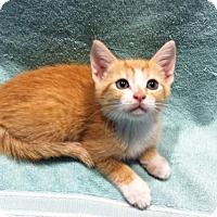 Adopt A Pet :: Gavin - Watkinsville, GA