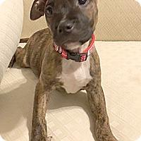 Adopt A Pet :: Matilda - Cincinnati, OH