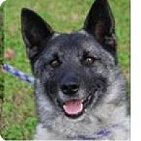 Adopt A Pet :: APU: Eligible Low Fees - Red Bluff, CA