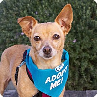 Adopt A Pet :: Shirley Chi - Pacific Grove, CA
