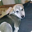 Adopt A Pet :: Tucker Adoption Pending -Congrats Tiffany & Greg!