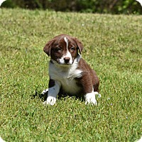 Adopt A Pet :: Holmes - Groton, MA