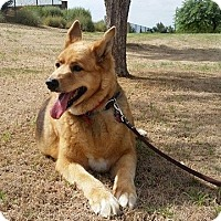Adopt A Pet :: Bronco Billy - Phoenix, AZ