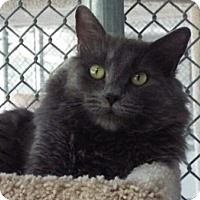 Adopt A Pet :: Lily - Grants Pass, OR