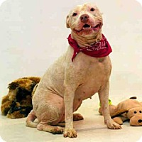 Adopt A Pet :: FELICIA - Sanford, FL