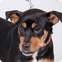 Adopt A Pet :: Heidi - Jupiter, FL