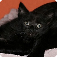 Adopt A Pet :: Wisteria - Rochester, NY