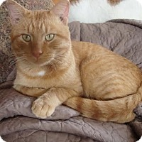Adopt A Pet :: Golden Graham - Rochester, MN