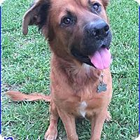 Adopt A Pet :: Dobby - Homestead, FL