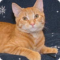 Adopt A Pet :: Fredrick - Elmwood Park, NJ