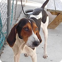 Adopt A Pet :: Travis - Lake Panasoffkee, FL