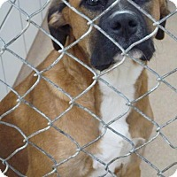 Adopt A Pet :: 46554 Cell Dog Peaches pending - Zanesville, OH
