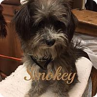 Adopt A Pet :: Smokey - Maitland, FL