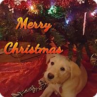 Adopt A Pet :: Annie - Palestine, TX