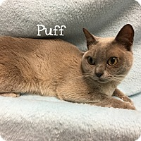 Adopt A Pet :: Puff - Foothill Ranch, CA