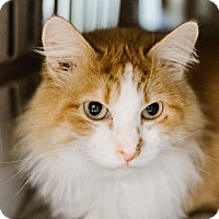 Adopt A Pet :: Herb - Indianapolis, IN