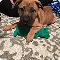 Adopt A Pet :: RORY - Sterling, MA