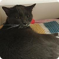 Adopt A Pet :: Thatcher - Reisterstown, MD