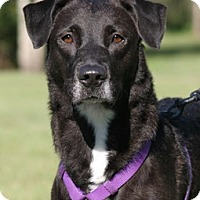 Adopt A Pet :: Sasha - North Fort Myers, FL