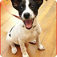Adopt A Pet :: Oreo - Temple City, CA