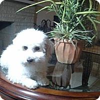 Adopt A Pet :: Winnie - San Dimas, CA