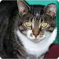 Adopt A Pet :: Freeway - Secaucus, NJ