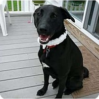 Adopt A Pet :: Jenny - PENDING! - kennebunkport, ME