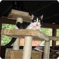 Adopt A Pet :: Polly - Clay, NY
