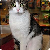 Adopt A Pet :: Gwen - Farmingdale, NY