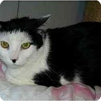 Adopt A Pet :: Ronnie - Odenton, MD