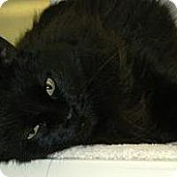Adopt A Pet :: Luna - Cheyenne, WY