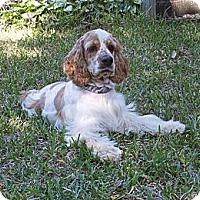 Adopt A Pet :: Reid - Sugarland, TX
