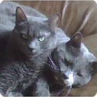 Adopt A Pet :: Best Friends Kramer and Ike - Chicago, IL