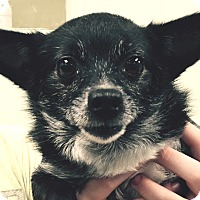 Adopt A Pet :: Lela - geneva, FL