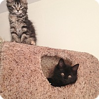 Adopt A Pet :: Mocha - Horsham, PA