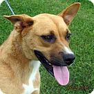 Adopt A Pet :: Neeta