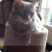 Adopt A Pet :: Lucy - Lincoln, NE