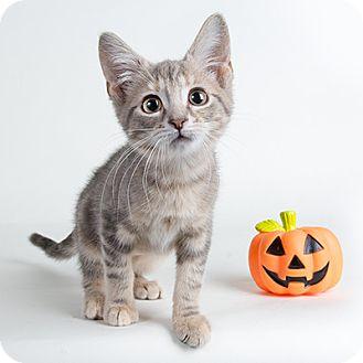 Wilmington Cat Rescue