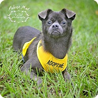 Adopt A Pet :: Tiny Moo - Fort Valley, GA