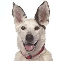 Adopt A Pet :: Coconut - Santa Monica, CA