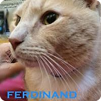 Adopt A Pet :: Ferdinand - Washington, DC
