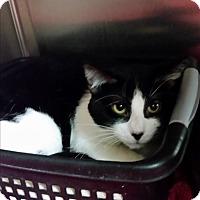 Adopt A Pet :: Weston - Chippewa Falls, WI