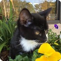 Adopt A Pet :: Screech - Gadsden, AL