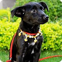 Adopt A Pet :: Alesha - Surrey, BC