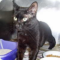 Adopt A Pet :: Jacob - Fall River, MA