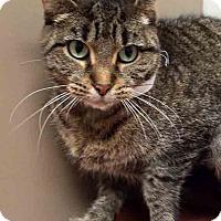 Adopt A Pet :: Shellie - Plainfield, IL