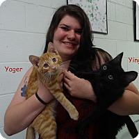 Adopt A Pet :: Yingling - Elyria, OH